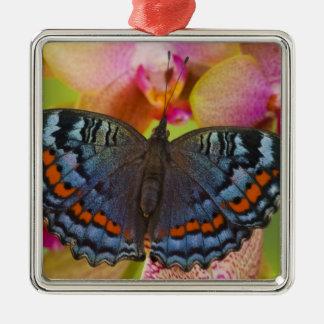 Sammamish Washington Tropical Butterfly 2 Christmas Ornament