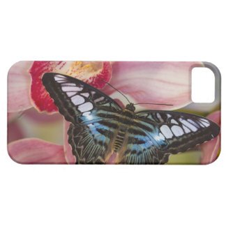 Sammamish, Washington Tropical Butterfly 2 iPhone 5 Cover
