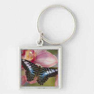 Sammamish, Washington Tropical Butterfly 2 Key Ring