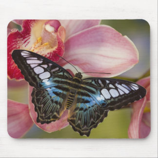 Sammamish, Washington Tropical Butterfly 2 Mouse Mat