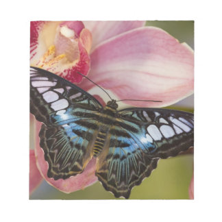 Sammamish, Washington Tropical Butterfly 2 Notepad