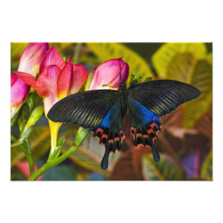 Sammamish, Washington Tropical Butterfly 2 Photo Print