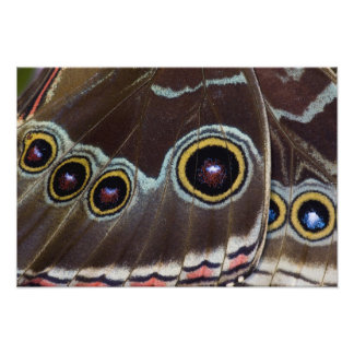 Sammamish Washington Tropical Butterfly 2 Photographic Print