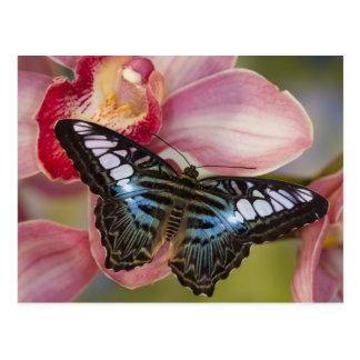 Sammamish, Washington Tropical Butterfly 2 Postcard