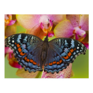 Sammamish Washington Tropical Butterfly 2 Postcard