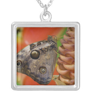 Sammamish, Washington Tropical Butterfly 2 Silver Plated Necklace