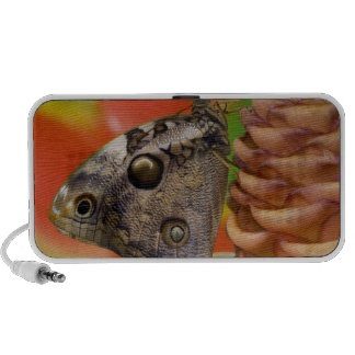 Sammamish, Washington Tropical Butterfly 2 iPod Speakers