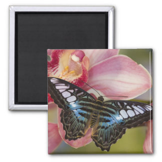 Sammamish, Washington Tropical Butterfly 2 Square Magnet