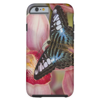 Sammamish, Washington Tropical Butterfly 2 Tough iPhone 6 Case