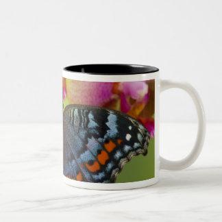 Sammamish Washington Tropical Butterfly 2 Two-Tone Coffee Mug