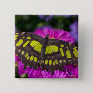 Sammamish, Washington Tropical Butterfly 30 15 Cm Square Badge