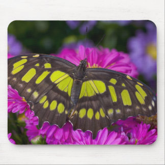 Sammamish, Washington Tropical Butterfly 30 Mouse Mat