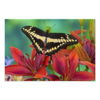 Sammamish, Washington Tropical Butterfly 30 Photo Print