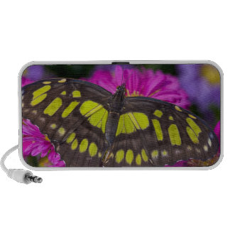Sammamish, Washington Tropical Butterfly 30 Travelling Speaker