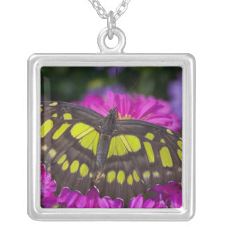 Sammamish, Washington Tropical Butterfly 30 Square Pendant Necklace