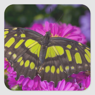 Sammamish, Washington Tropical Butterfly 30 Square Sticker