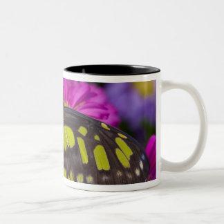 Sammamish, Washington Tropical Butterfly 30 Two-Tone Coffee Mug