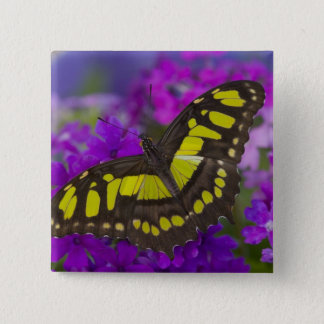 Sammamish, Washington Tropical Butterfly 31 15 Cm Square Badge