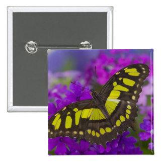 Sammamish, Washington Tropical Butterfly 31 15 Cm Square Badge