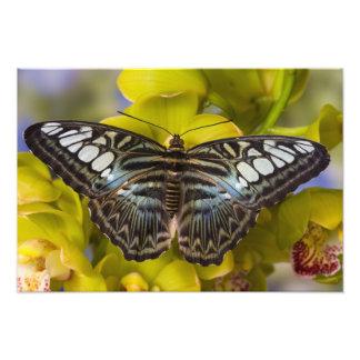 Sammamish, Washington Tropical Butterfly 31 Art Photo
