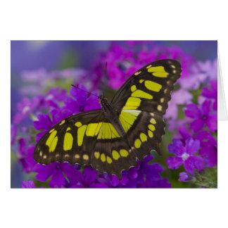 Sammamish, Washington Tropical Butterfly 31 Card