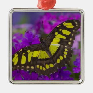 Sammamish, Washington Tropical Butterfly 31 Christmas Ornament