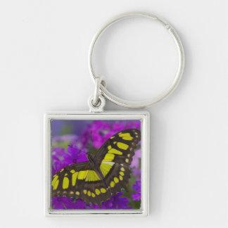 Sammamish, Washington Tropical Butterfly 31 Key Ring