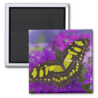 Sammamish, Washington Tropical Butterfly 31 Magnet