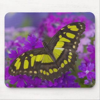 Sammamish, Washington Tropical Butterfly 31 Mouse Mat