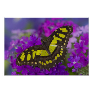 Sammamish, Washington Tropical Butterfly 31 Poster