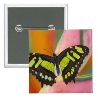 Sammamish, Washington Tropical Butterfly 32 15 Cm Square Badge