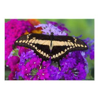 Sammamish, Washington Tropical Butterfly 32 Photo Print