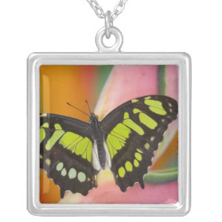 Sammamish, Washington Tropical Butterfly 32 Square Pendant Necklace