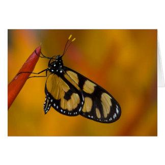 Sammamish, Washington Tropical Butterfly 33 Card