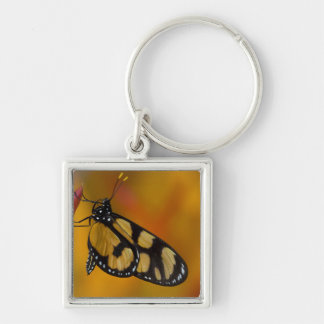 Sammamish, Washington Tropical Butterfly 33 Key Ring