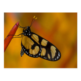 Sammamish, Washington Tropical Butterfly 33 Postcard