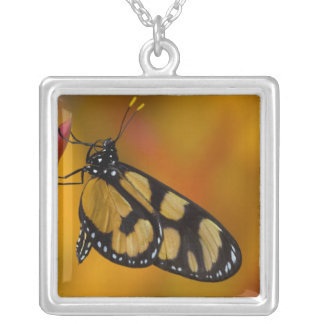 Sammamish, Washington Tropical Butterfly 33 Silver Plated Necklace