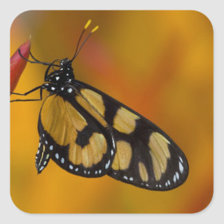 Sammamish, Washington Tropical Butterfly 33 Square Sticker