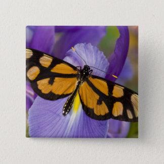 Sammamish, Washington Tropical Butterfly 34 15 Cm Square Badge