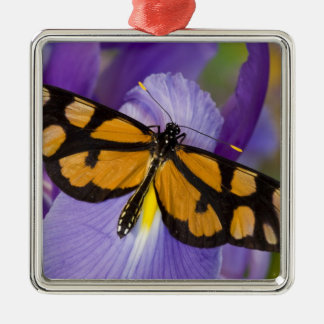 Sammamish, Washington Tropical Butterfly 34 Christmas Ornament