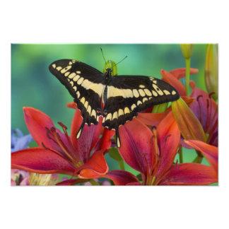 Sammamish, Washington Tropical Butterfly 34 Photo Print