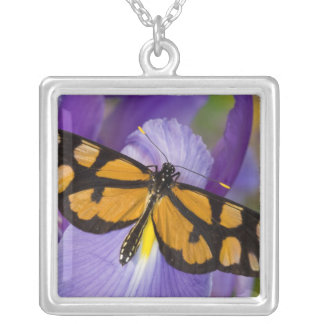 Sammamish, Washington Tropical Butterfly 34 Silver Plated Necklace