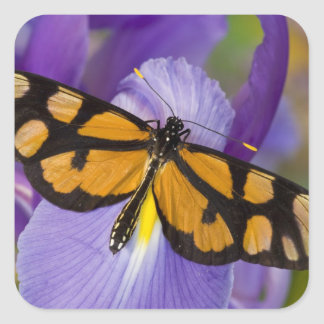 Sammamish, Washington Tropical Butterfly 34 Square Sticker