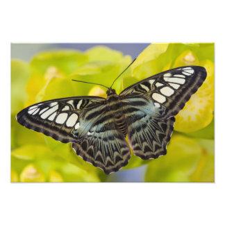Sammamish, Washington Tropical Butterfly 35 Art Photo