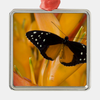 Sammamish, Washington Tropical Butterfly 35 Christmas Ornament