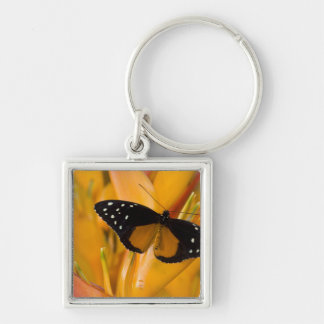 Sammamish, Washington Tropical Butterfly 35 Key Ring