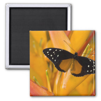 Sammamish, Washington Tropical Butterfly 35 Magnet