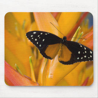 Sammamish, Washington Tropical Butterfly 35 Mouse Mat