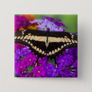 Sammamish, Washington Tropical Butterfly 36 15 Cm Square Badge