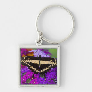 Sammamish, Washington Tropical Butterfly 36 Key Ring